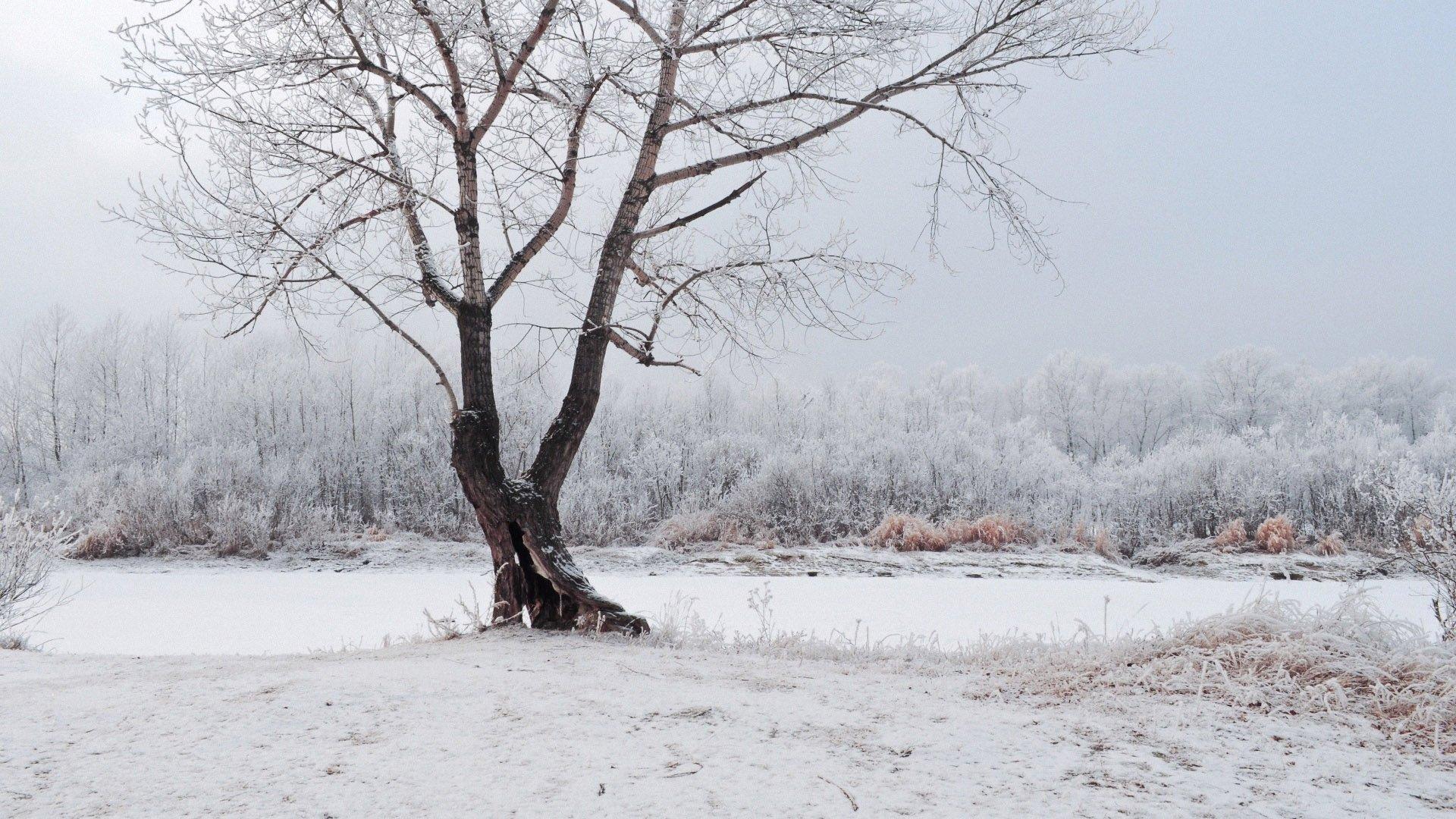 Winter Love Wallpaper - WallpaperSafari