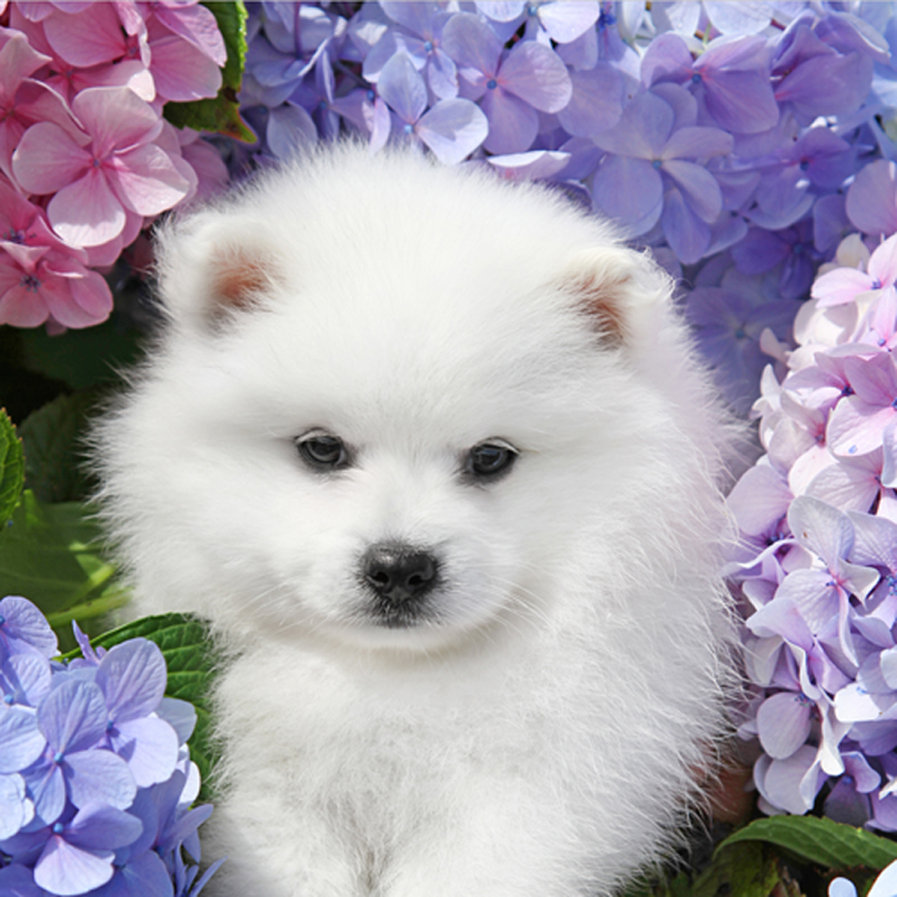 Flowers And Puppies Free Wallpaper