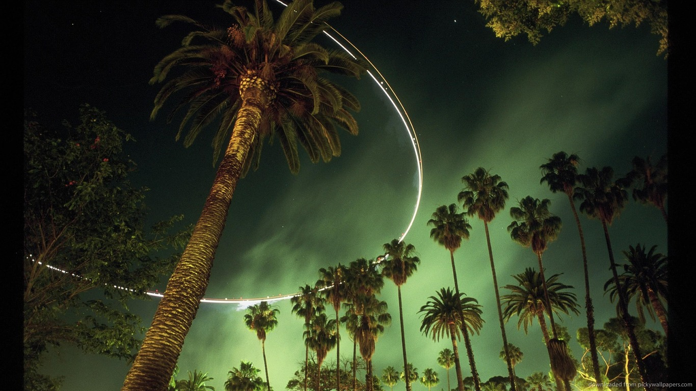Free Download La Palm Trees Wallpaper Los Angeles Palm Trees By
