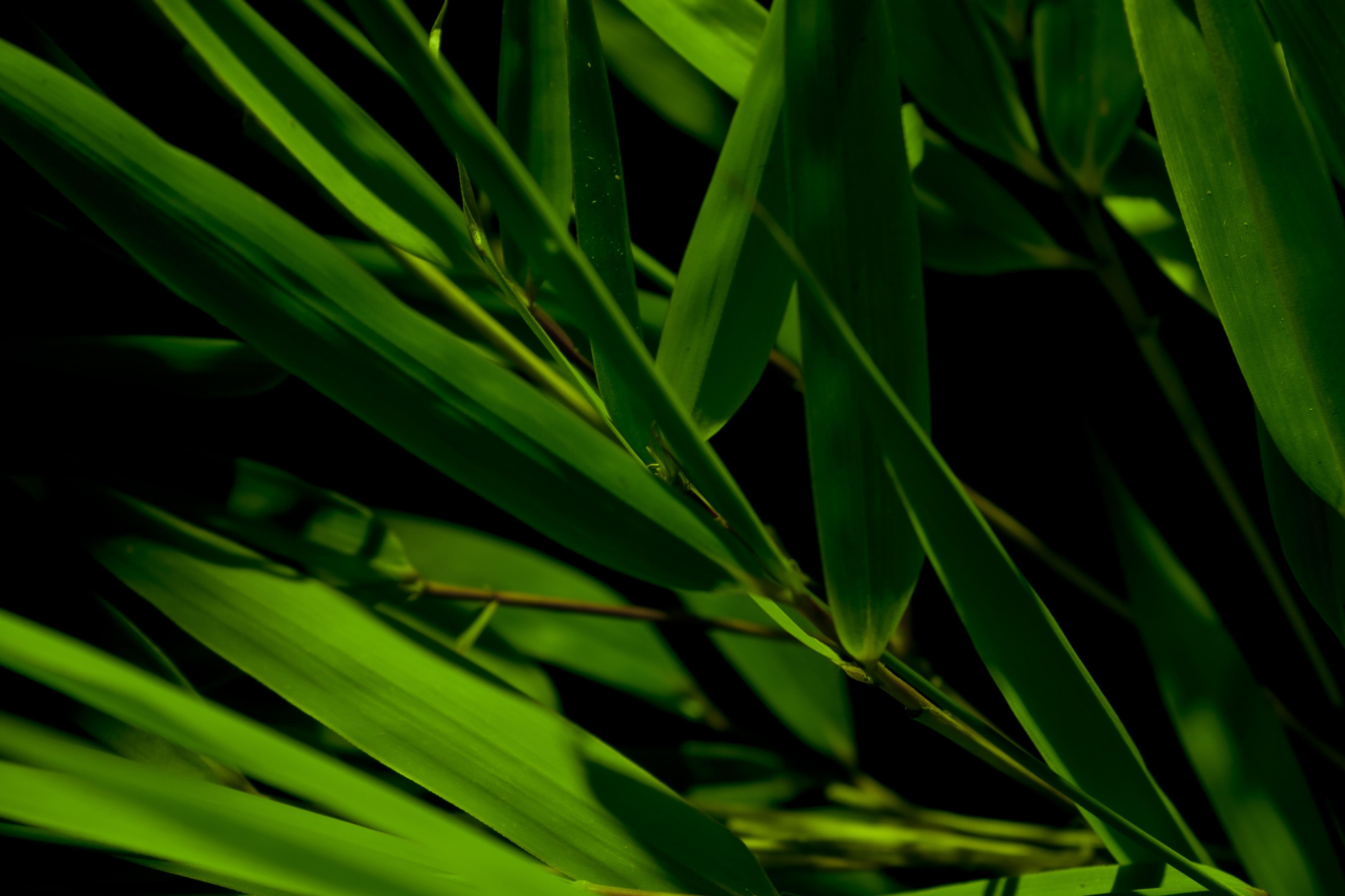 Bamboo Wallpaper Tropical