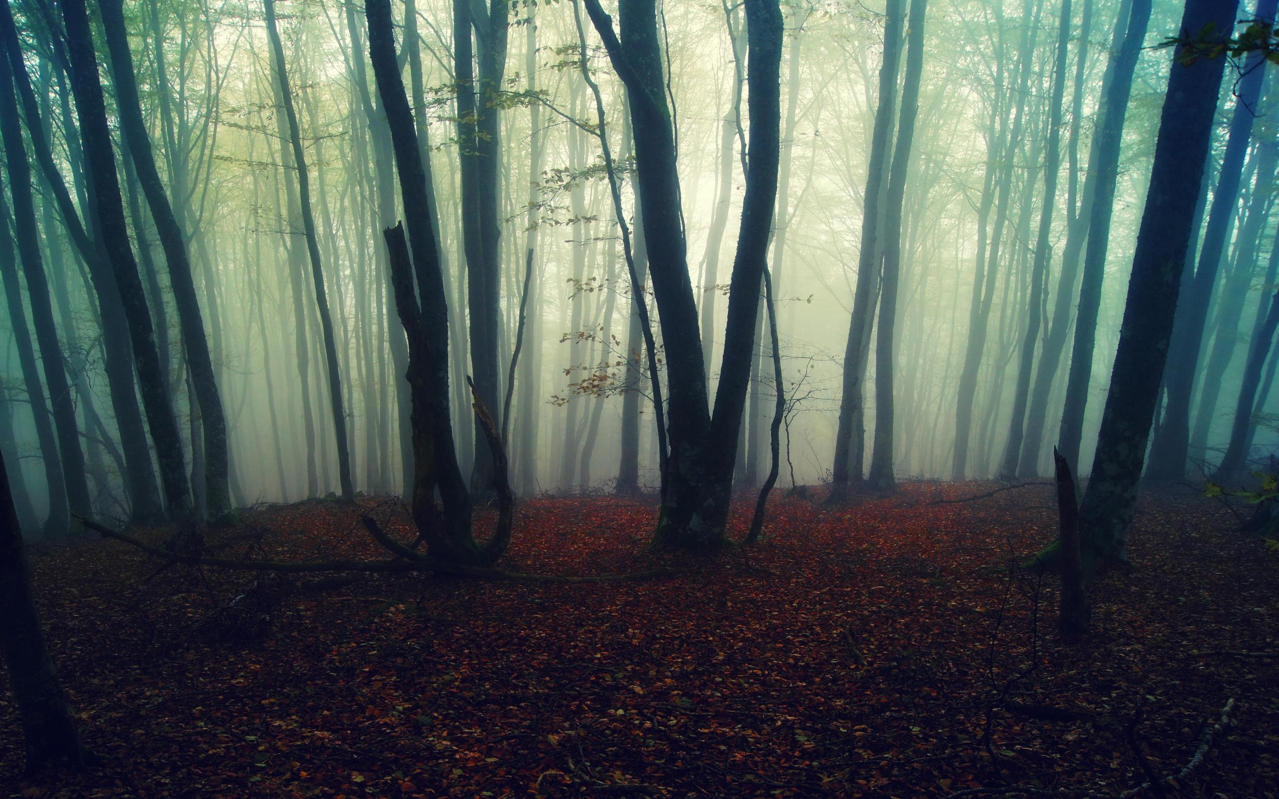 Autumn Wallpaper   foggy forest Wallpapers   HD Wallpapers 93147 2560x1600