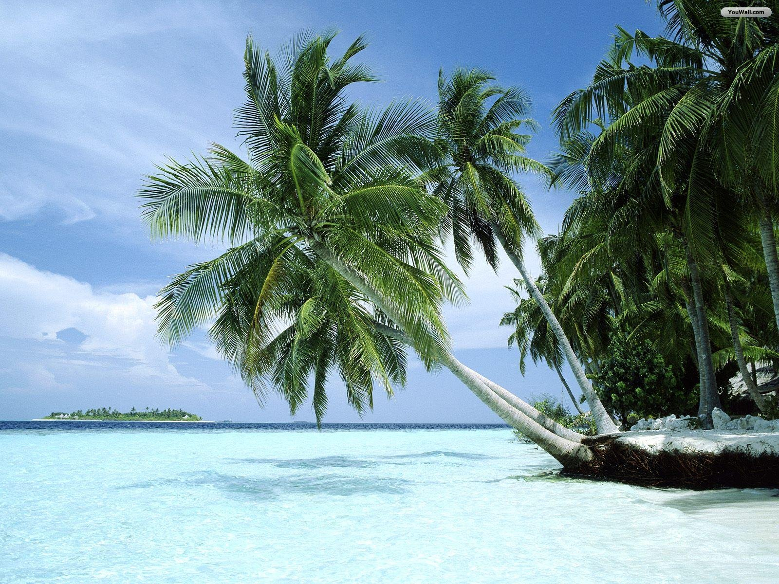 Paradise Beach Wallpaper   wallpaperwallpapersfree wallpaper 1600x1200