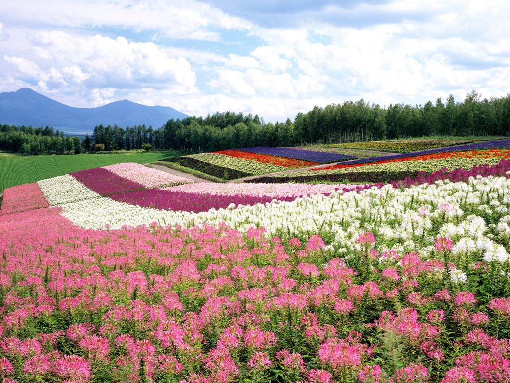 Download Scenes wallpaper Japan Hokkaido Landscape 1 1024x768