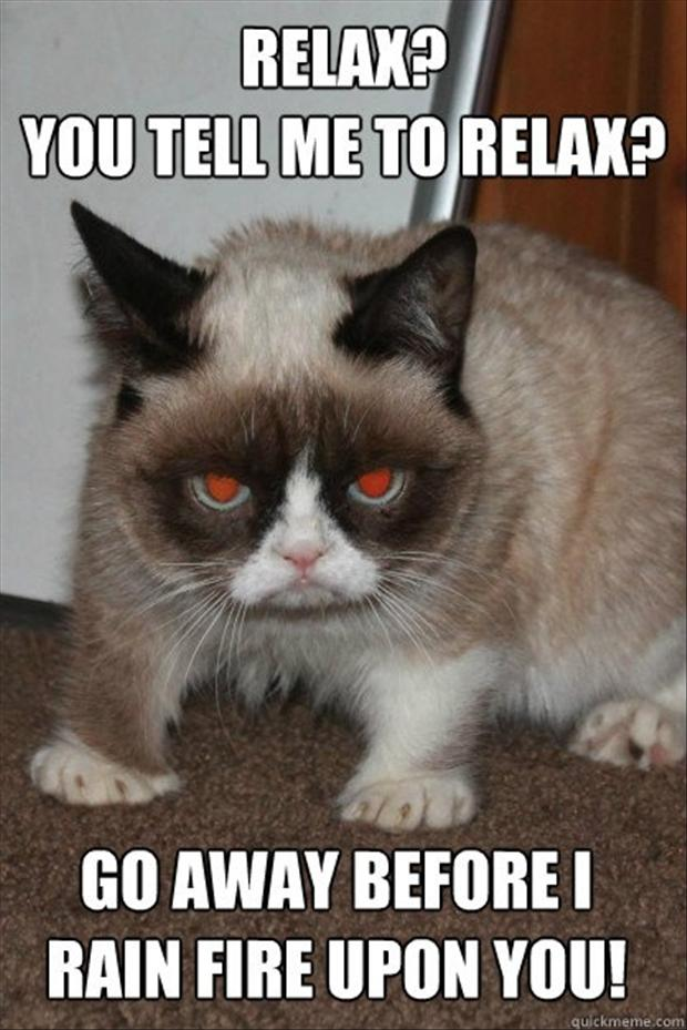 grumpy cat funny pictures   Dump A Day 620x929
