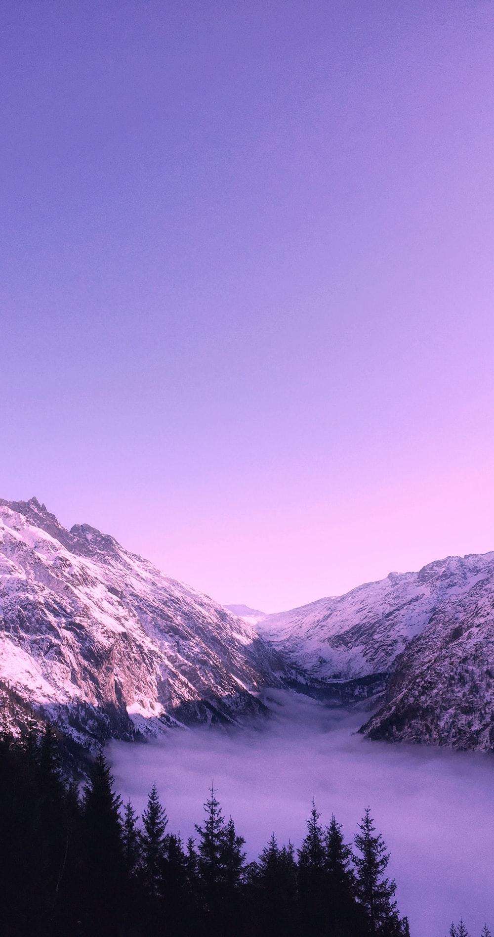 Purple Pictures [HD] Download Images on Unsplash 1000x1895