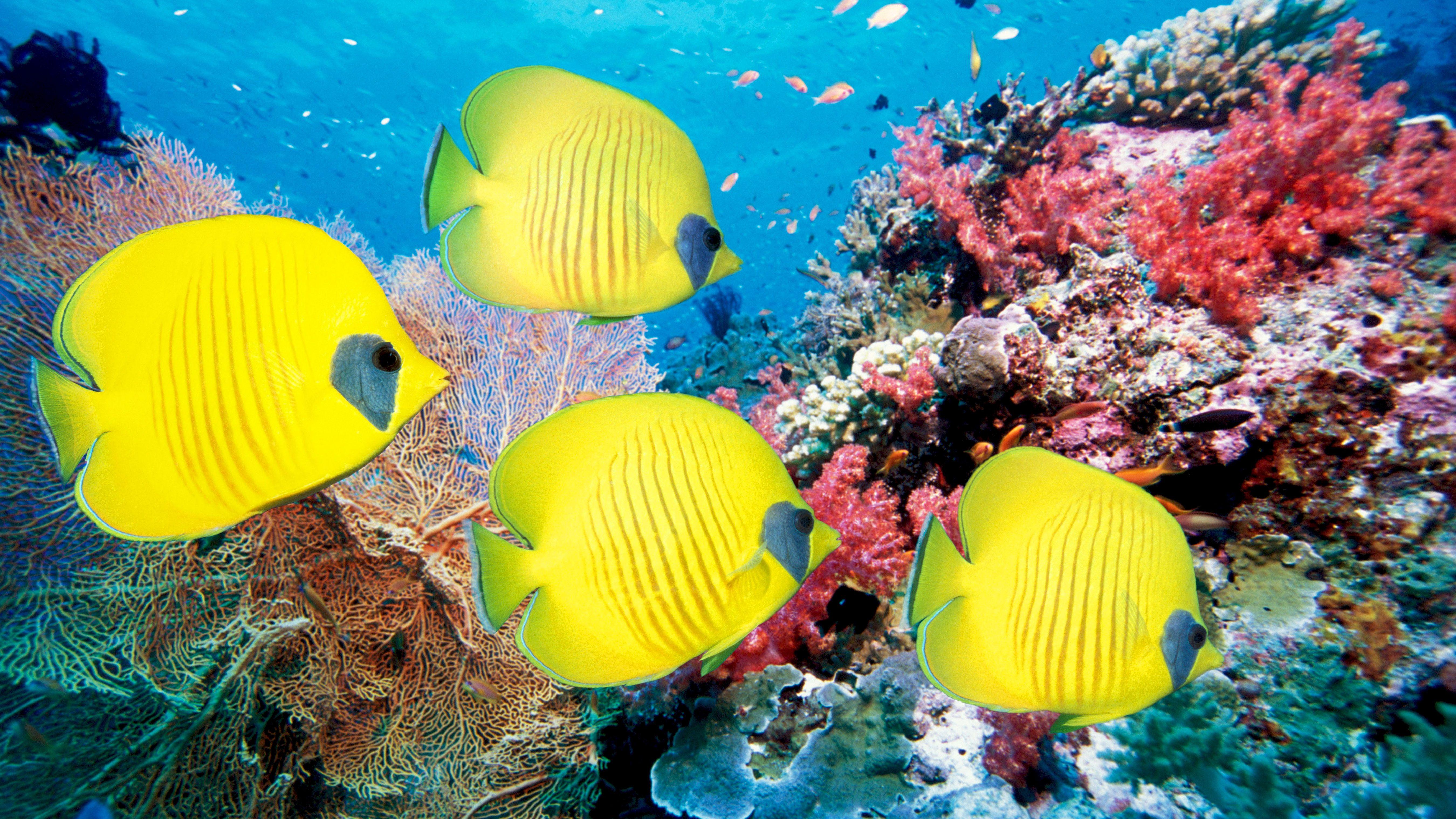 desktop wallpaper of coral fish wallpaper of colorful underwater 5400x3038