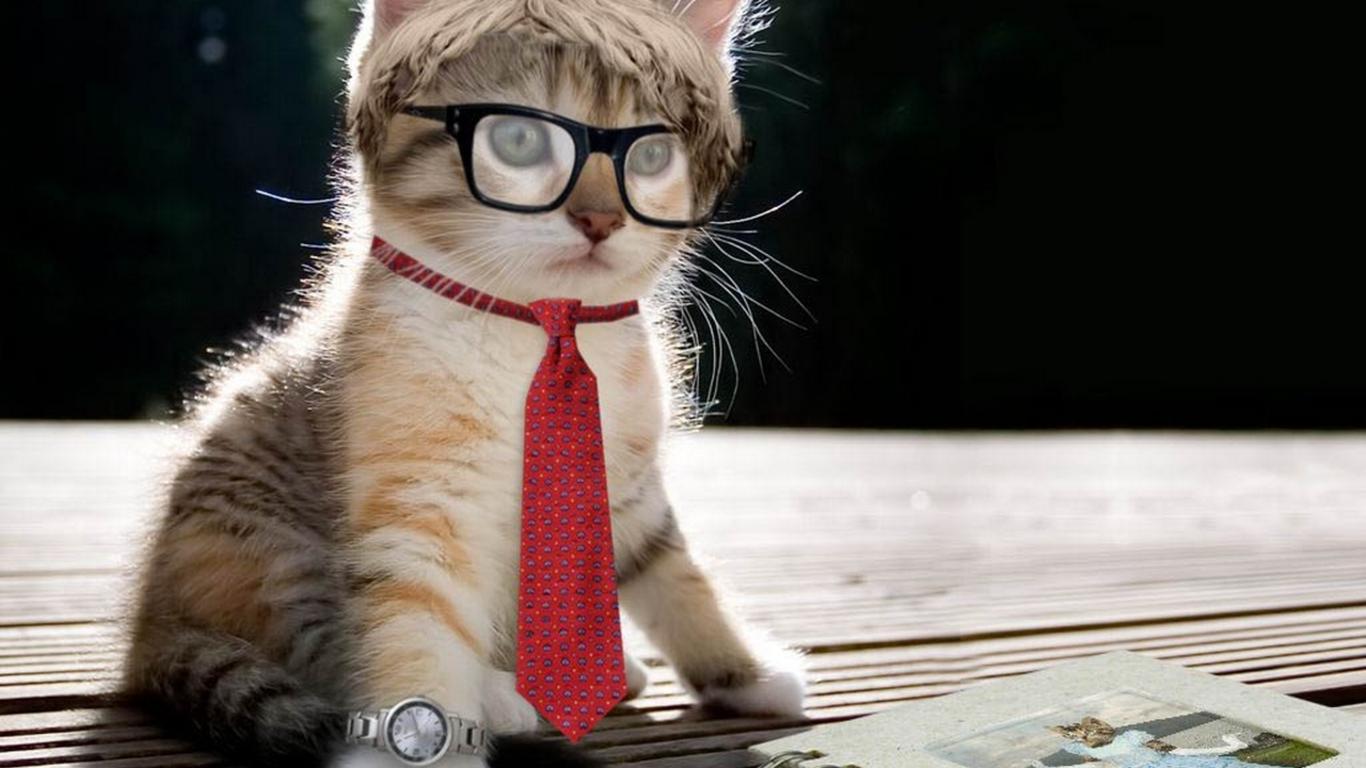 cool cat hd wallpaper - wallpapersafari