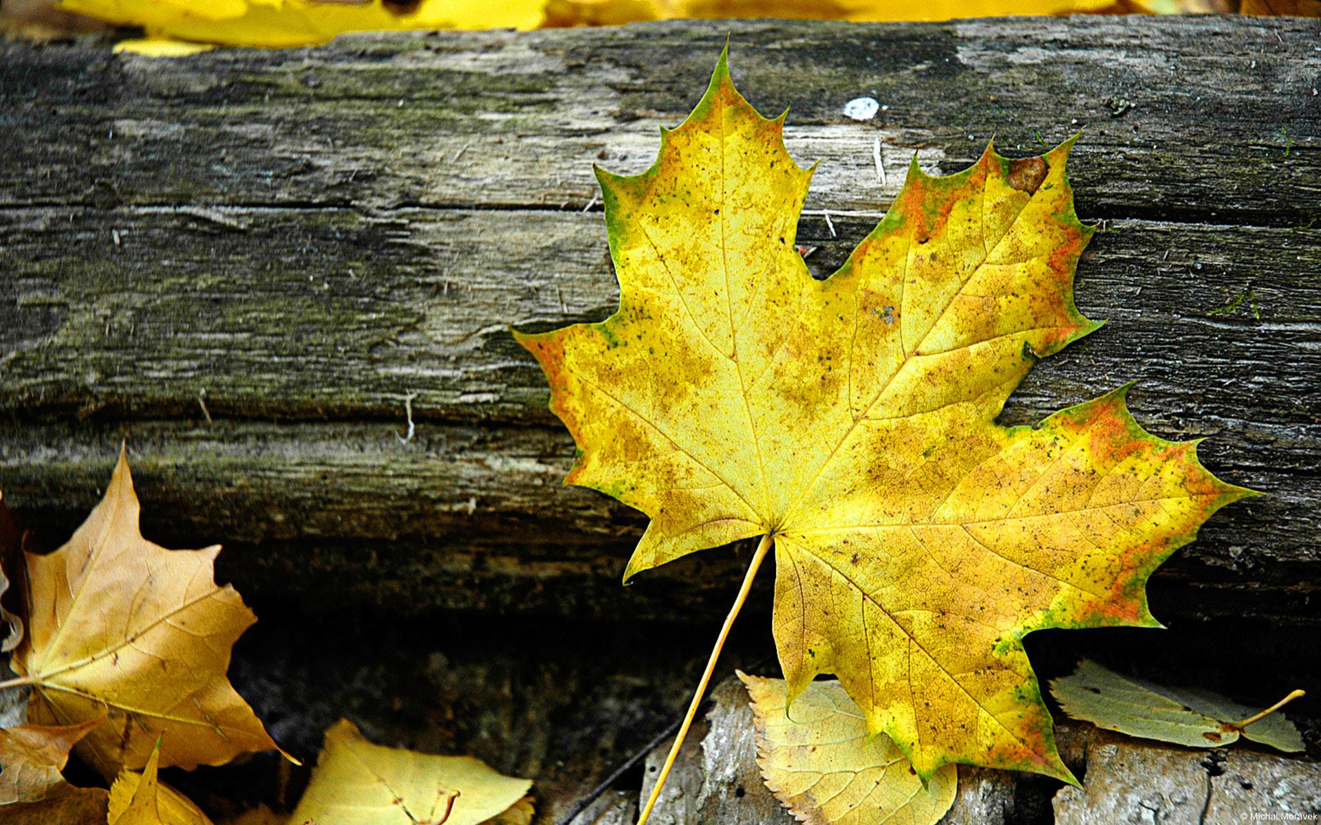 Autumn Leaves Windows 7 Desktop Backgrounds WindowsObservercom 1920x1200