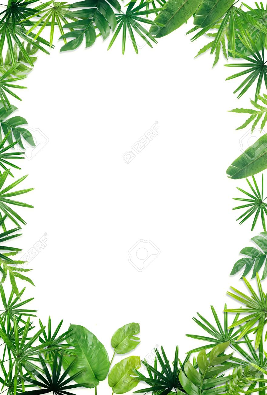 Green Leaf Border Background Stock Photo Picture And Royalty 880x1300