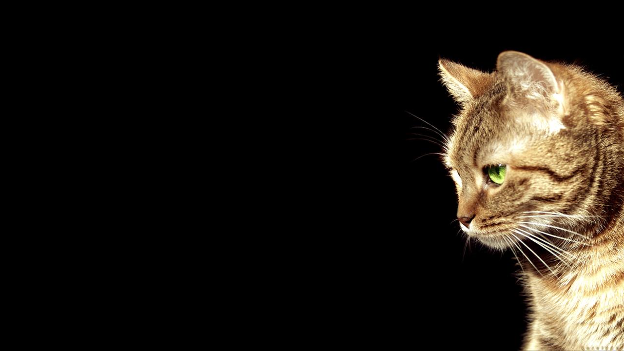 cybergatatumblrcompost33935923361cat fun cat wallpaper 1920x1080 1280x720