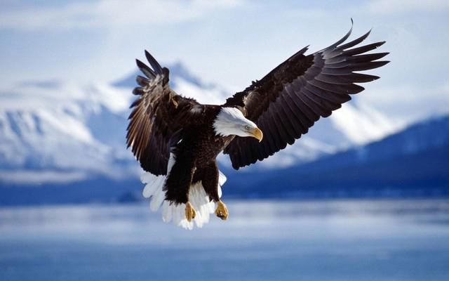 american eagle wallpaper 640x400