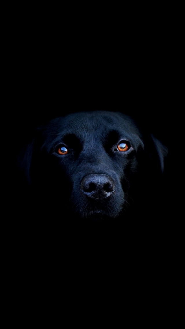 Black Dog iPhone 5s Wallpaper Download iPhone Wallpapers iPad 640x1136