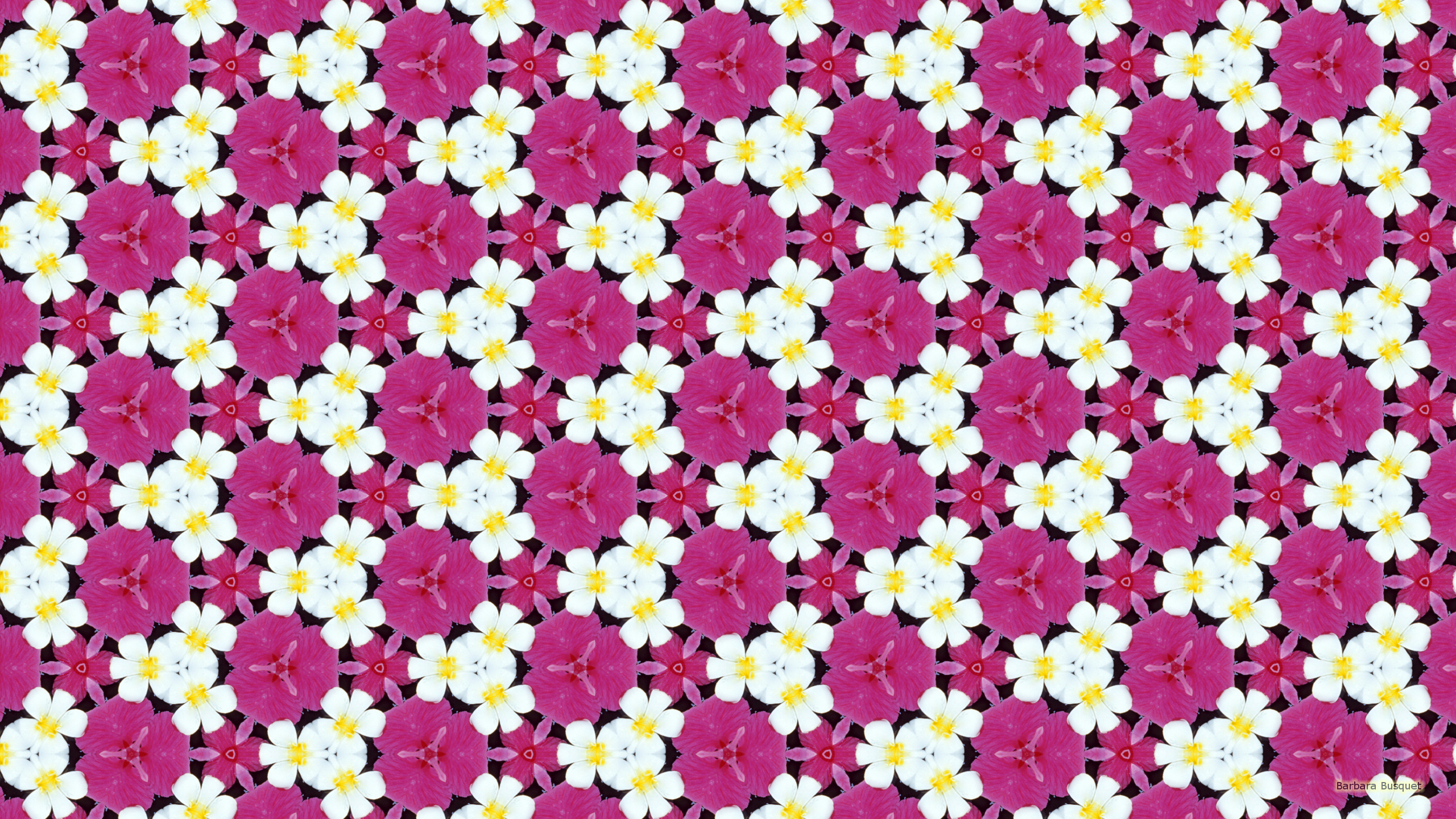 White and Pink Flowers Wallpaper - WallpaperSafari
