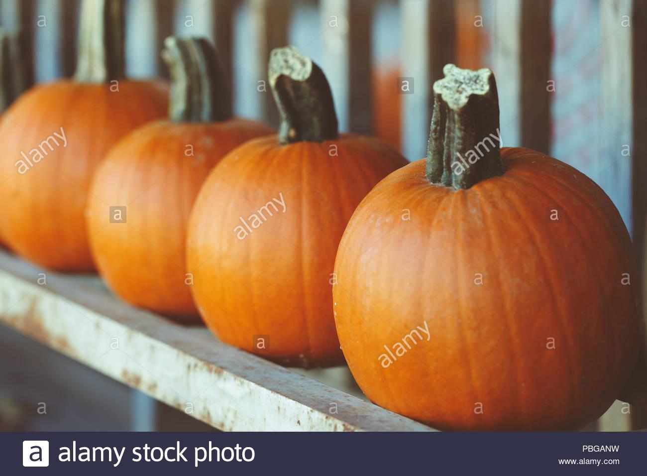 Fresh harvest farm pumpkins on shelf in market place Halloween 1300x956