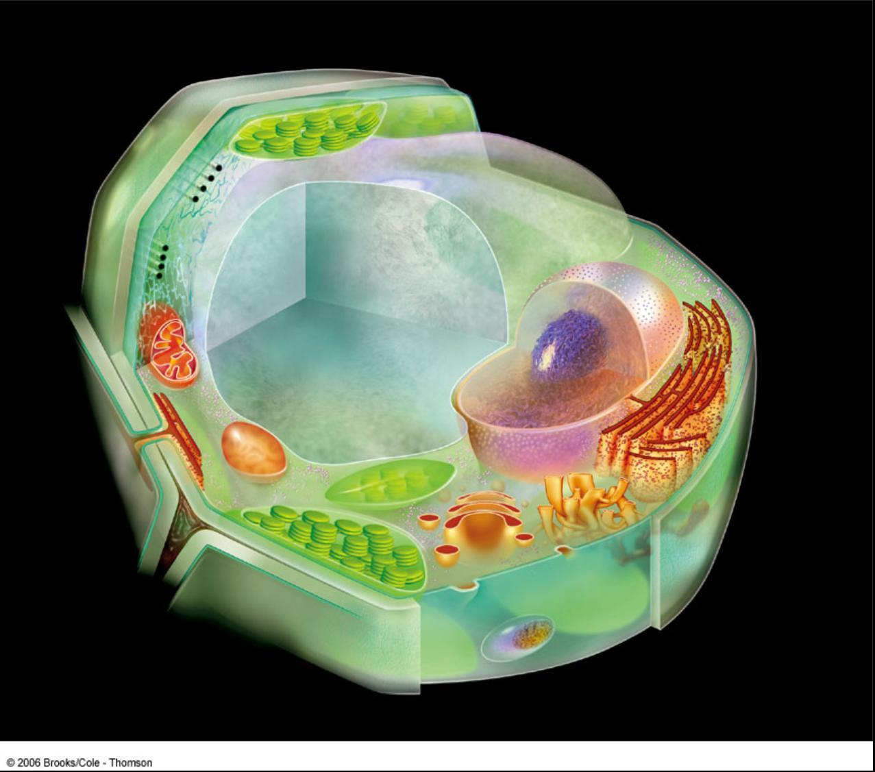 картинка про клетку так приятны глазу