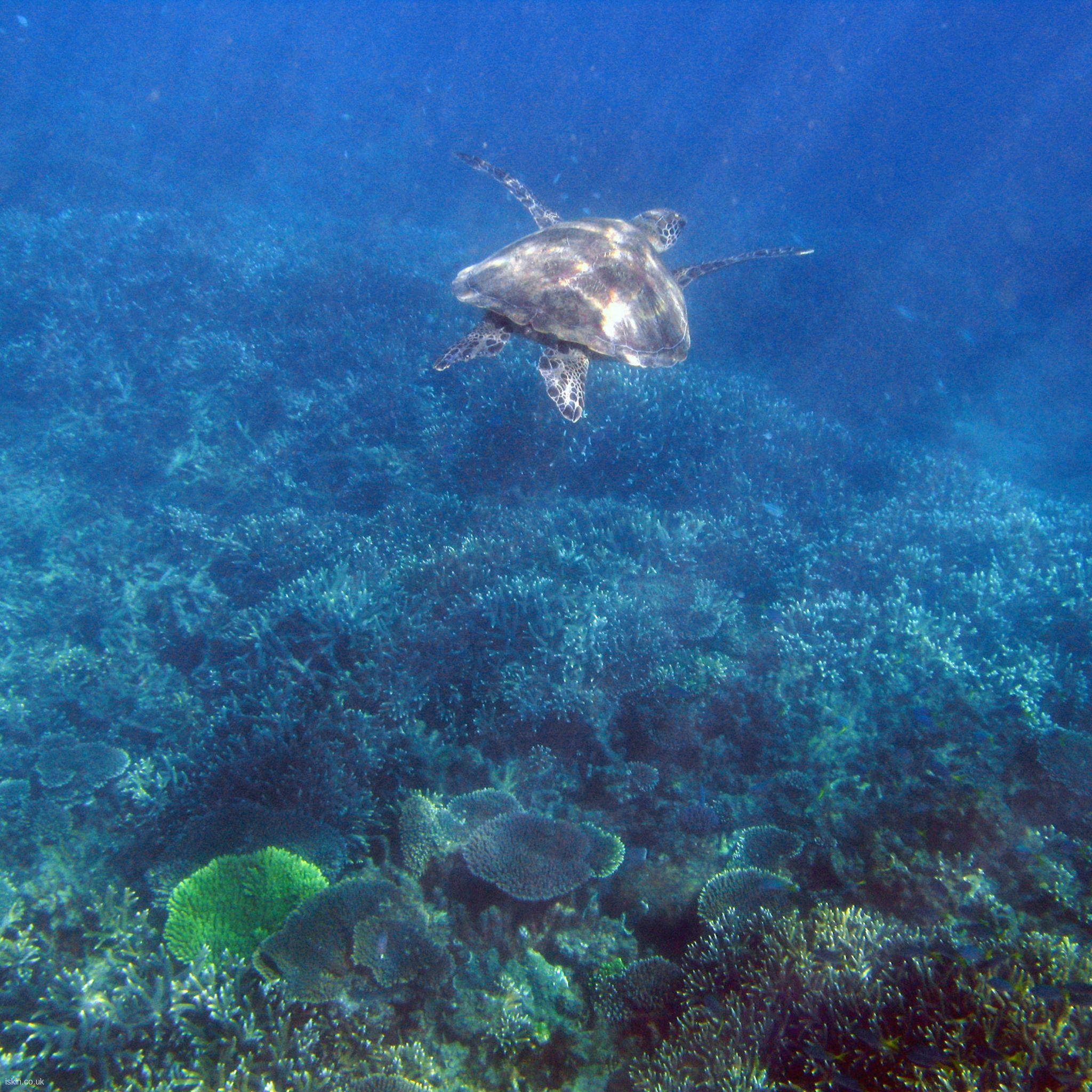 Sea Turtle 2048x2048