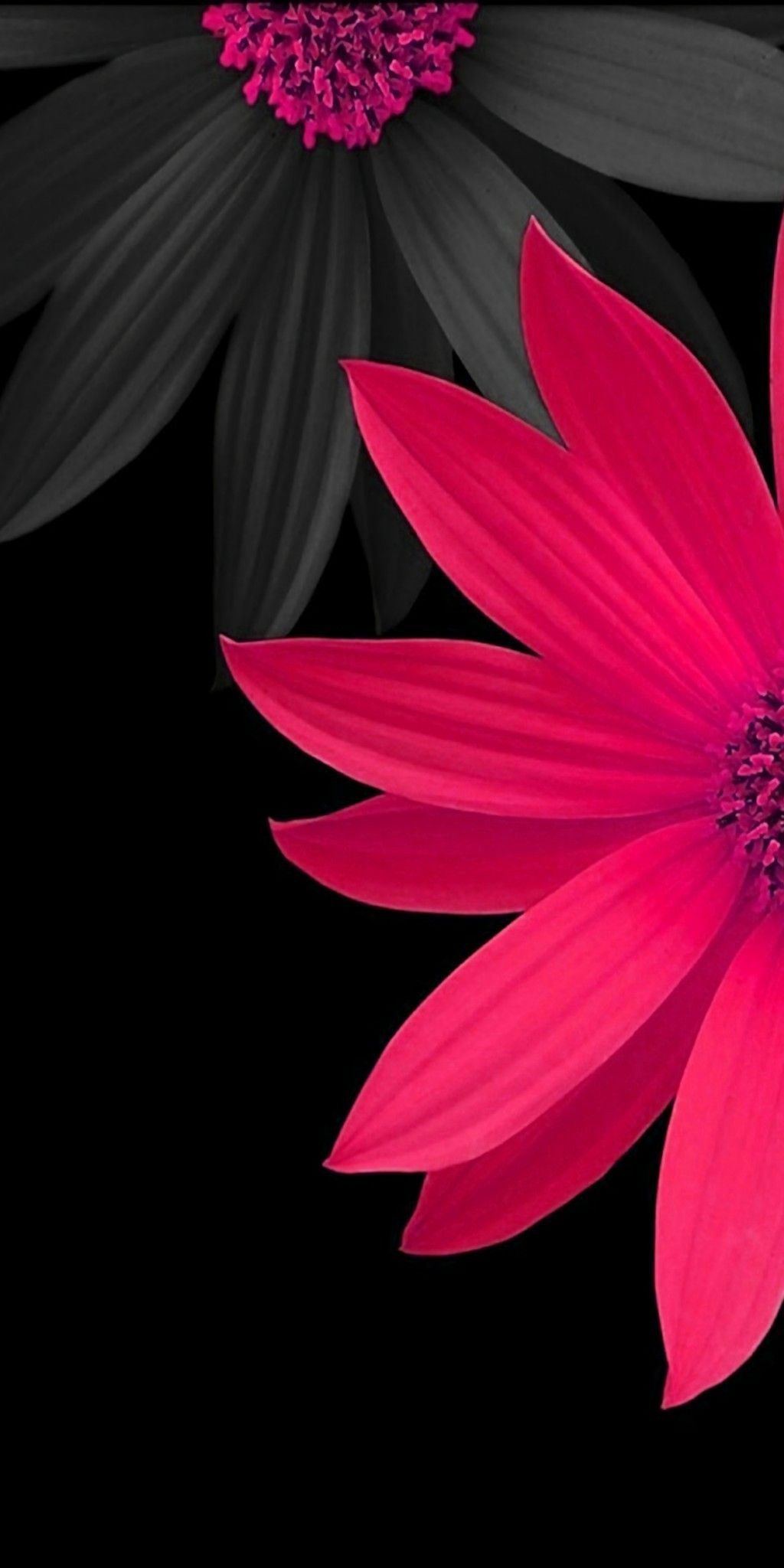 Pink and Black 3D Flowers Wallpaper Pink and Flowers Wallpaper 1024x2048