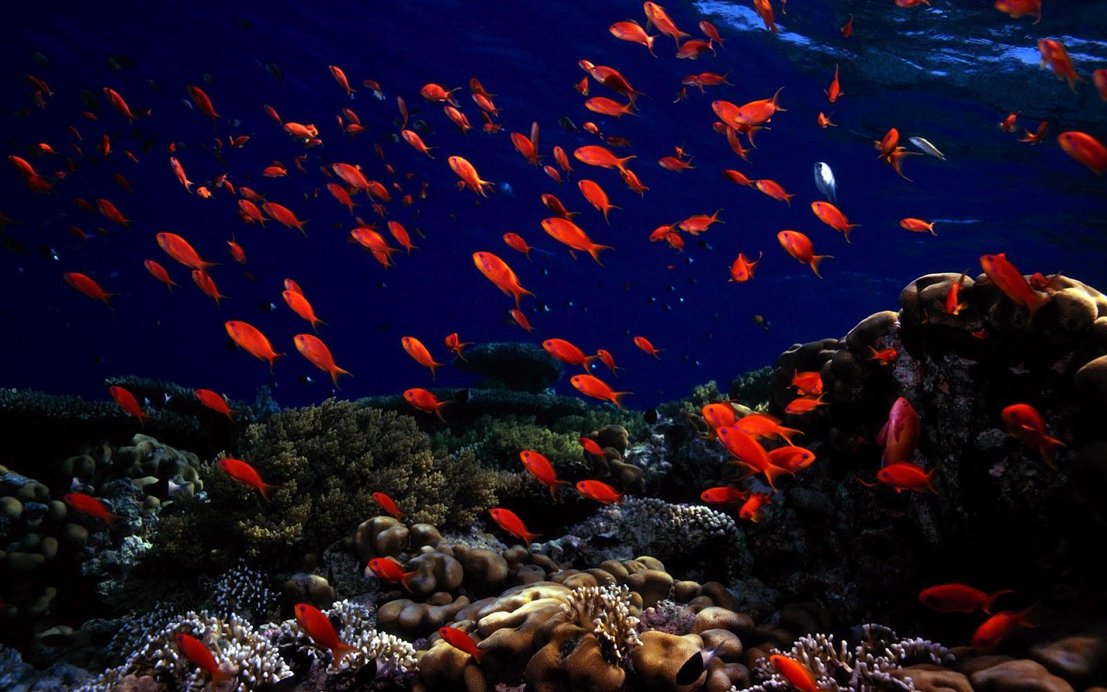 Free Download Best Wallpapers Collection Best Ocean Life Wallpaper