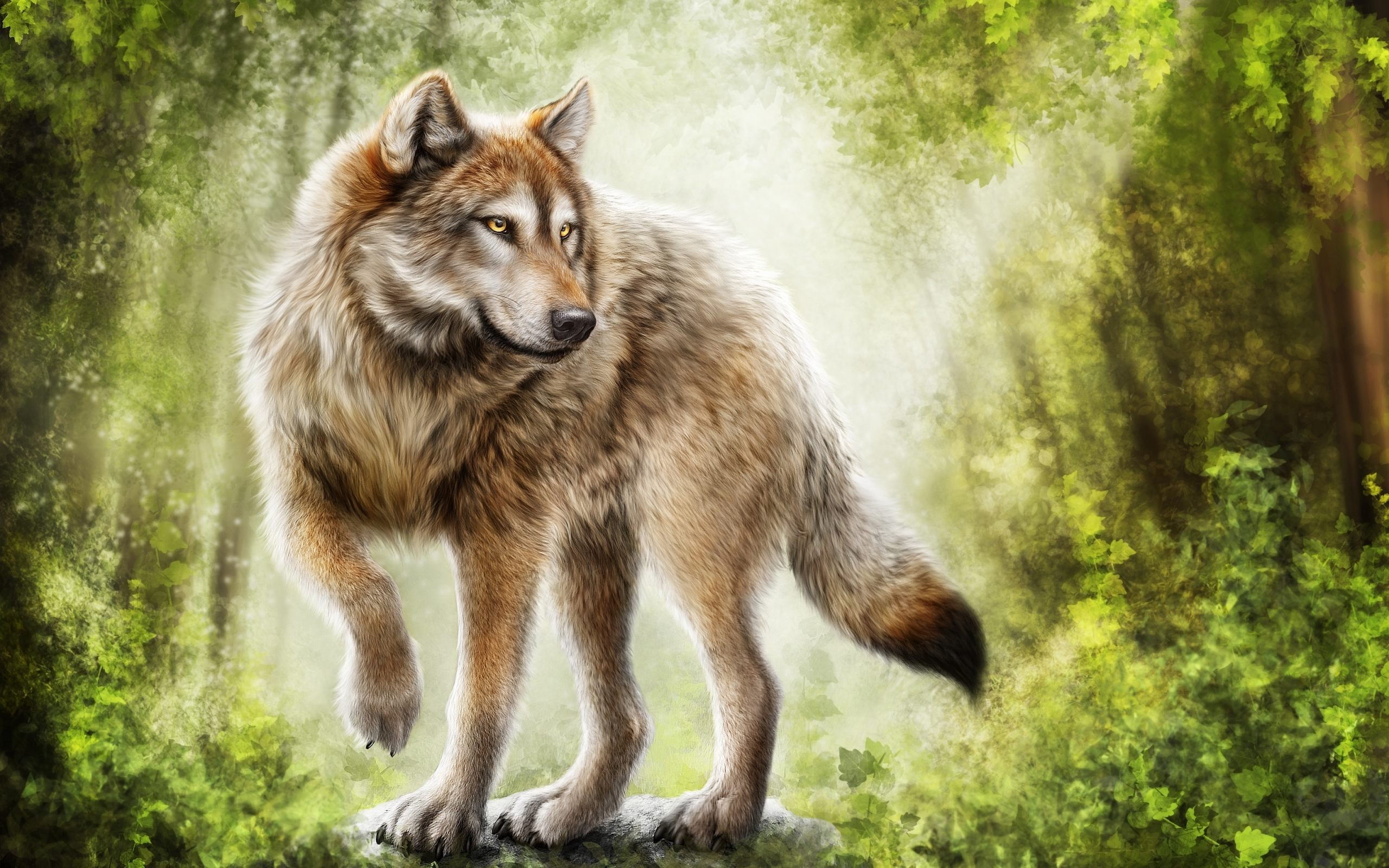Gray Wolf Wallpapers FSX52 HDQ Cover Wallpapers For 2560x1600