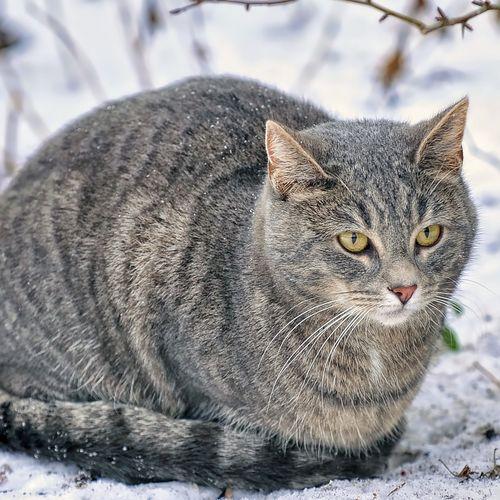 Hd3d Outdoor Download: Cats In Winter Wallpaper