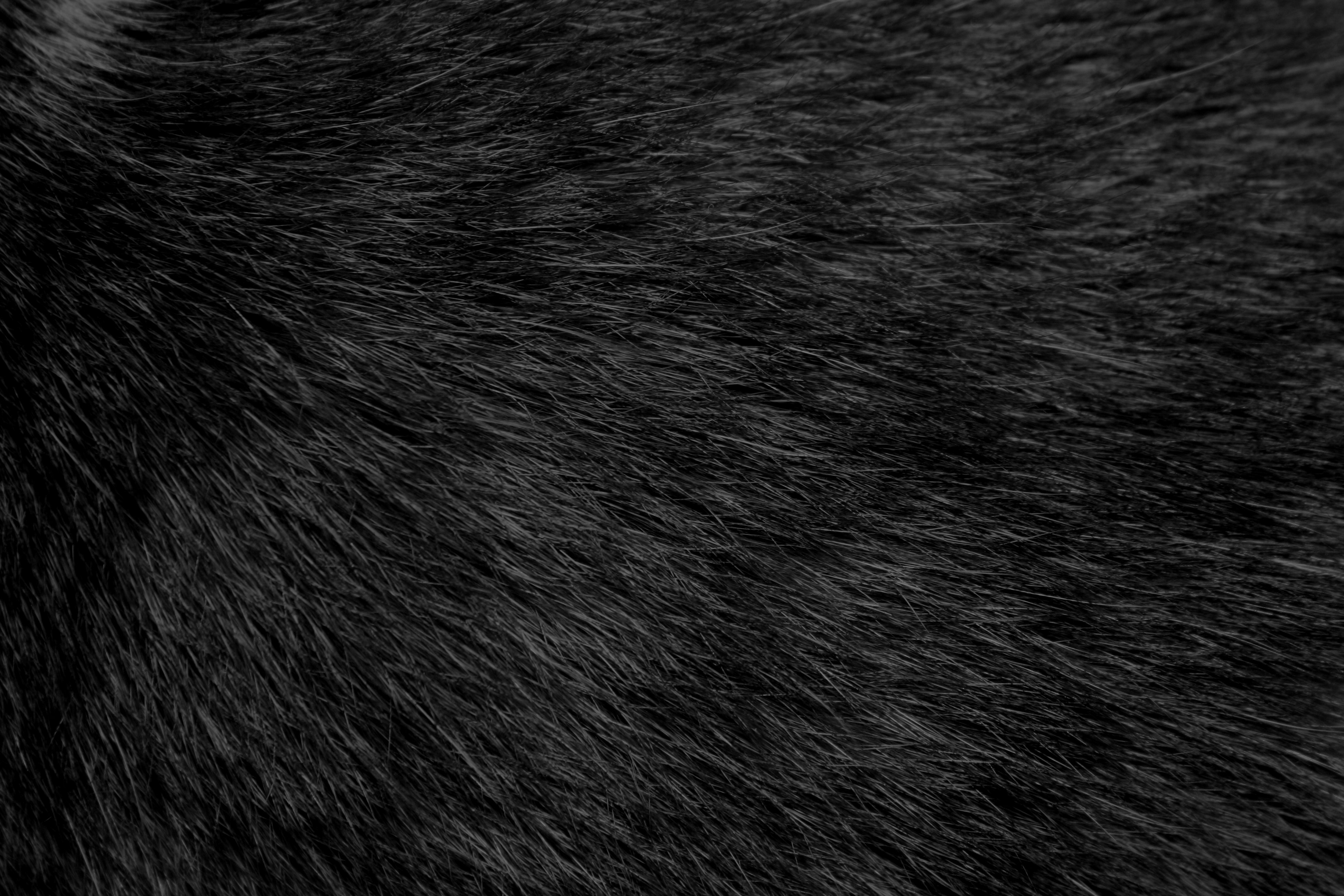 Black Cat Fur Texture   High Resolution Photo   Dimensions 3888 3888x2592