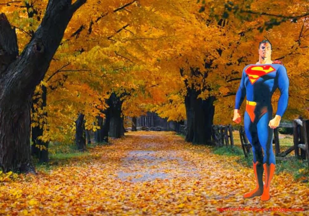 Wallpaper of Superman Standing Tall at Autumn Trees Desktop wallpaper 1000x700