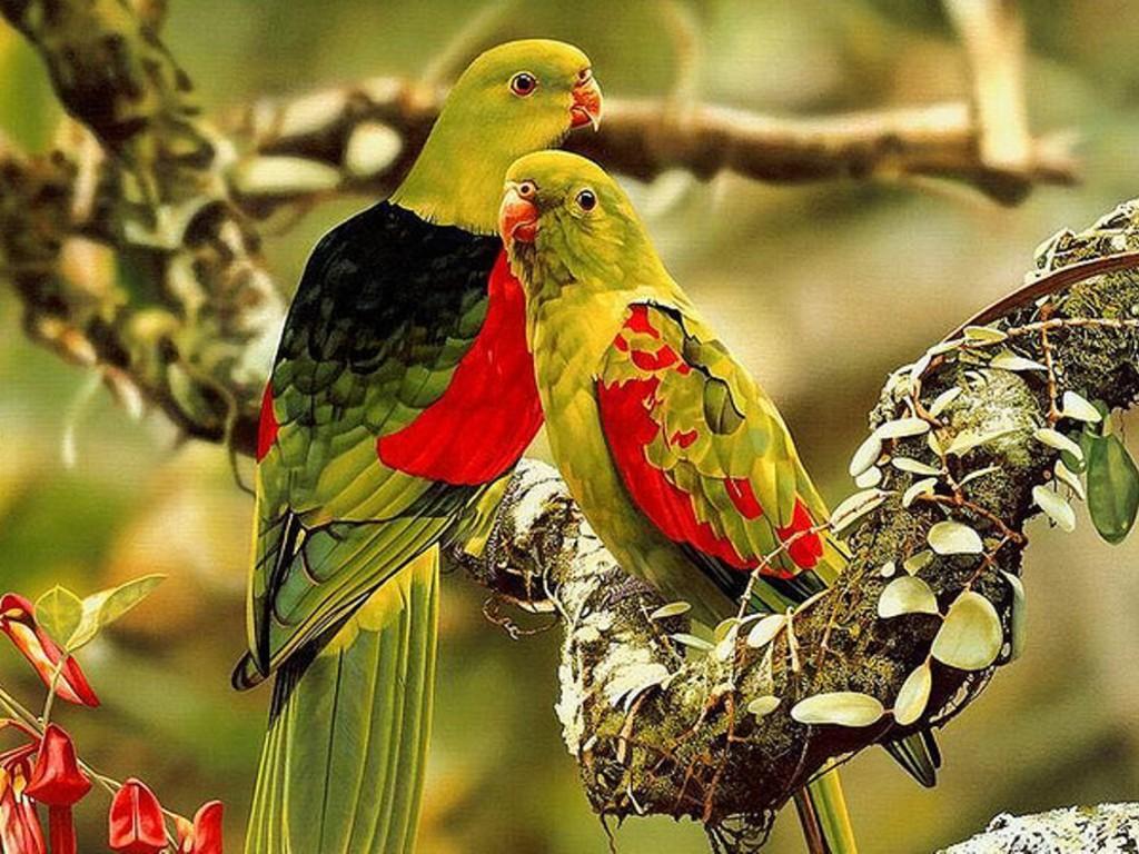 birdsphotos birdimageshd wallpapershdbirds Birds wallpapers 16 1024x768
