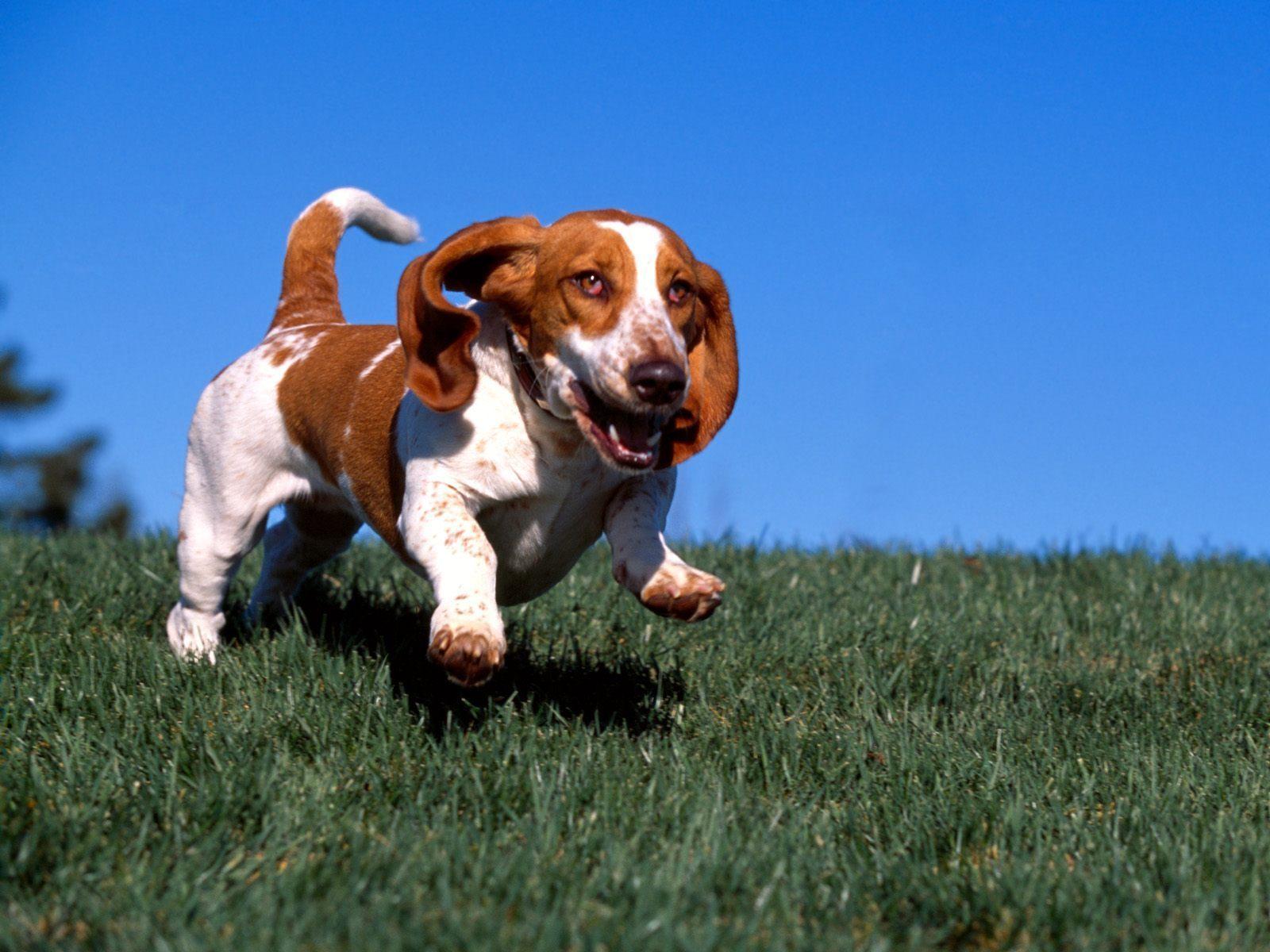 Its A Hound Dog wallpaper 1600x1200