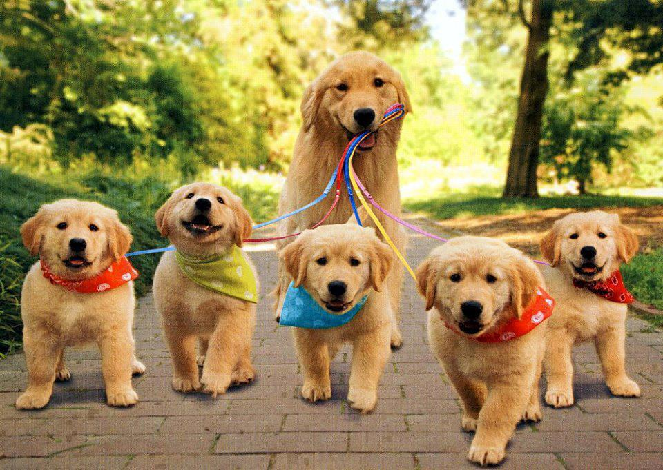 Cute Puppies Wallpapers Download 5 960x681
