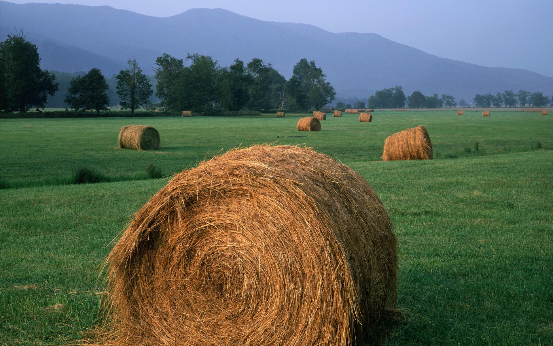 Agriculture Desktop Wallpaper - WallpaperSafari