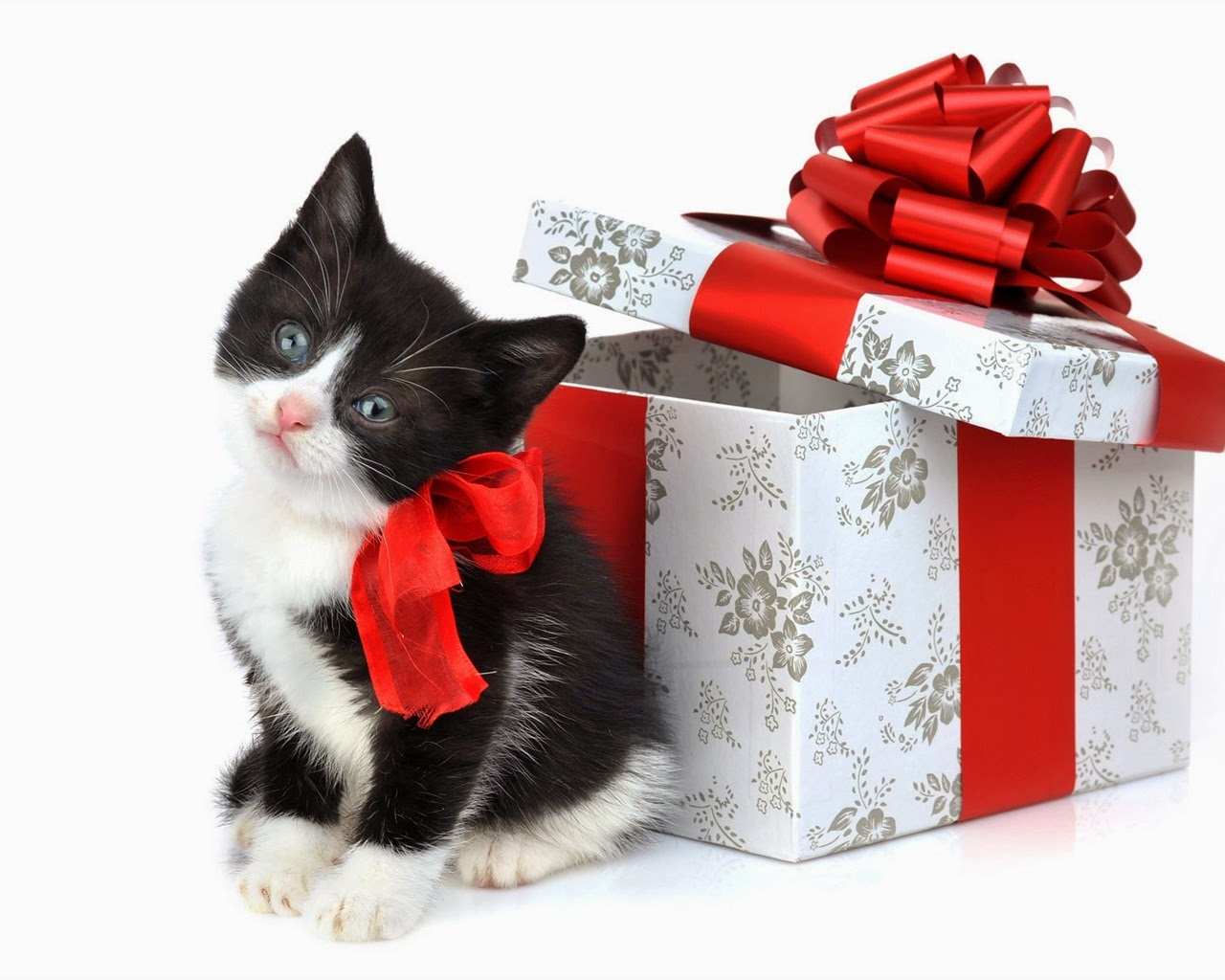 Cat Christmas gift wallpapers   beautiful desktop wallpapers 2014 1280x1024