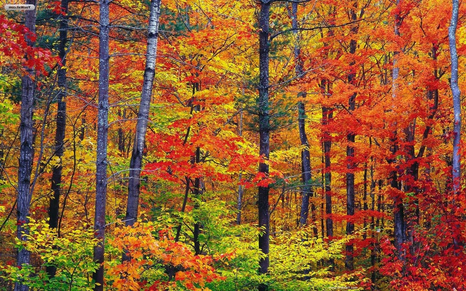 Fall Season Desktop Backgrounds Desktop Image 1600x1000