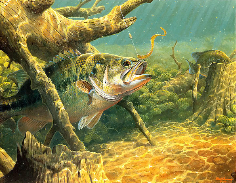 Bass Fishing Wallpaper 1440x1118