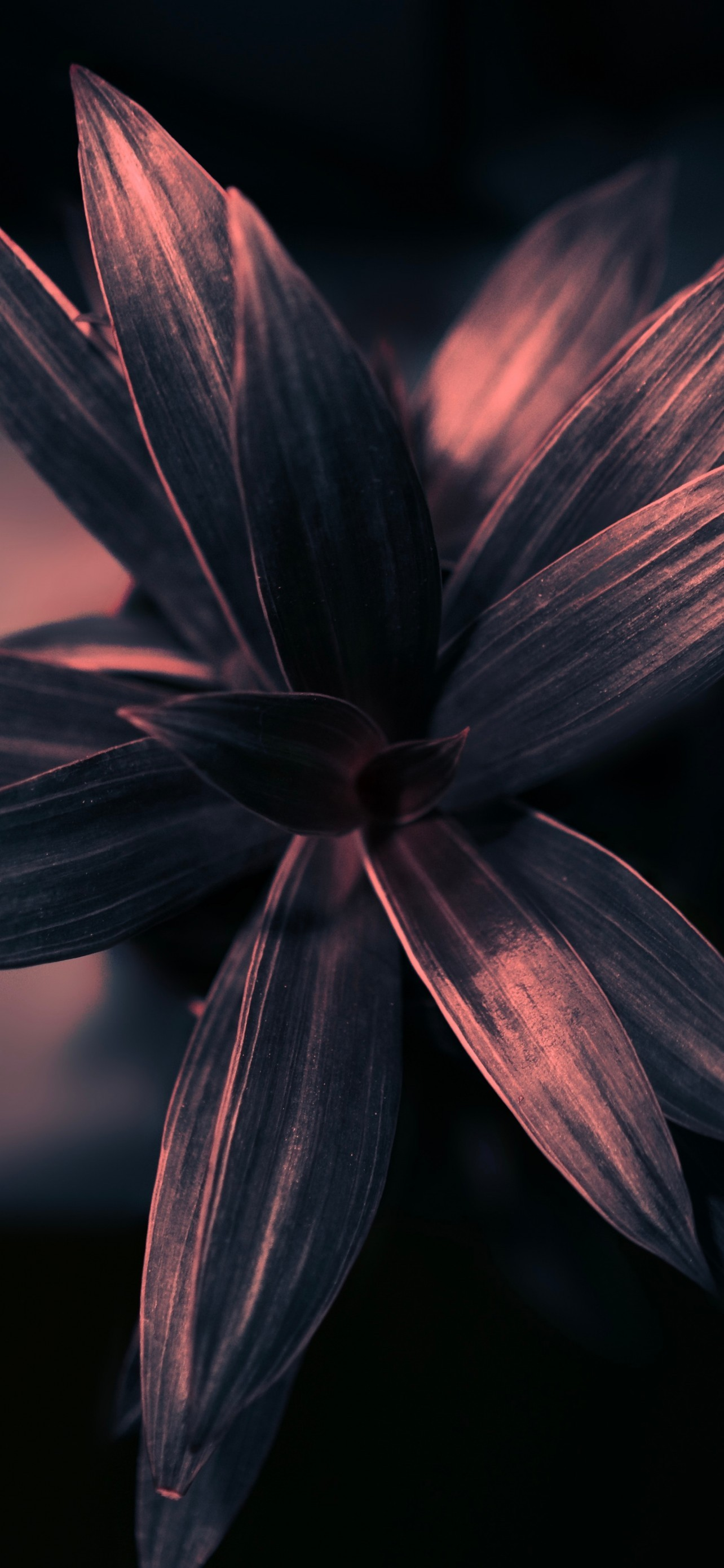 Download 1284x2778 Plant Petals Leaves Gloomy Photography 1284x2778