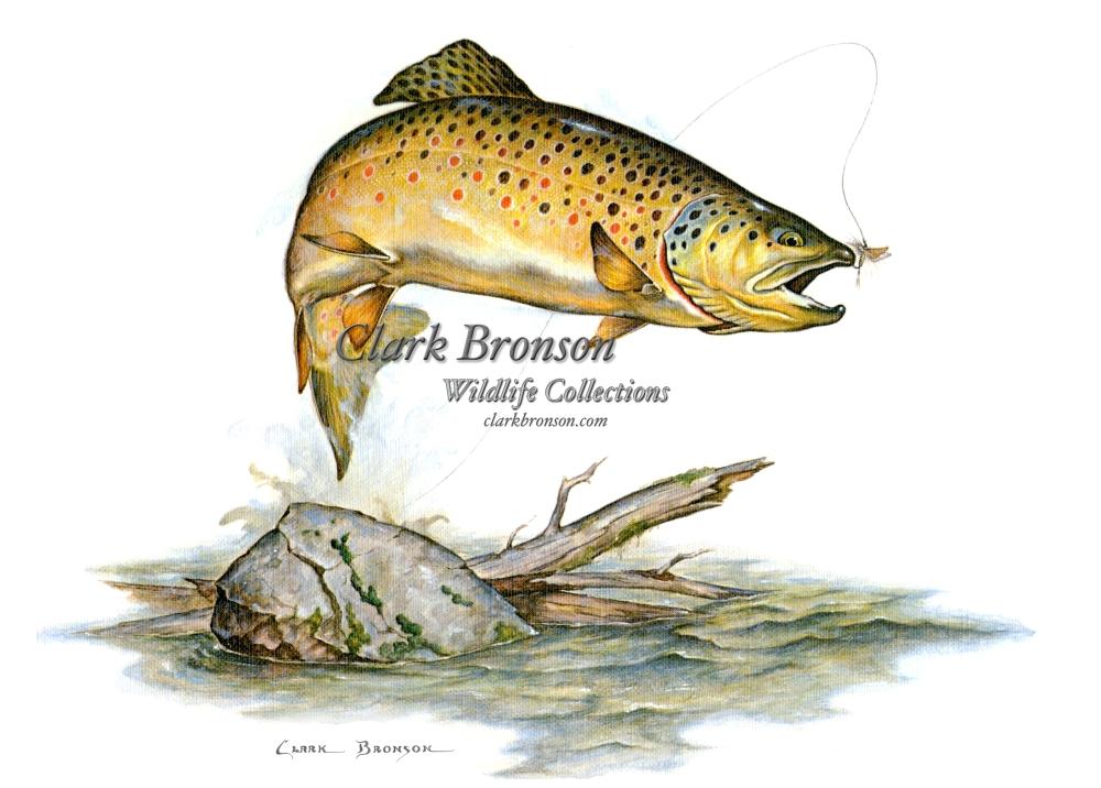 trout wallpaper free backgrounds - photo #38
