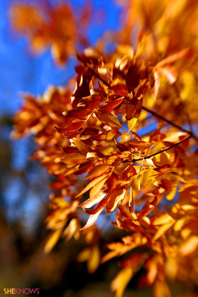 iPhone wallpapers for fall iPhone Wallpapers Pinterest 640x960