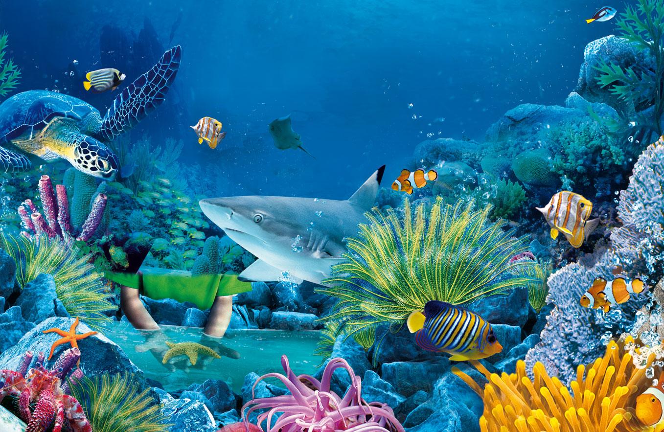 Marine Life Wallpaper - WallpaperSafari Hd Sea Life Wallpaper