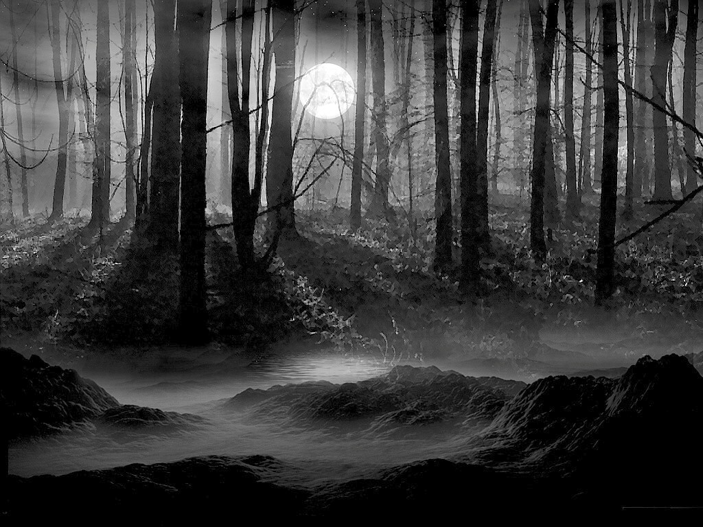 Forest Background Black and White wallpaper wallpaper hd 1024x768