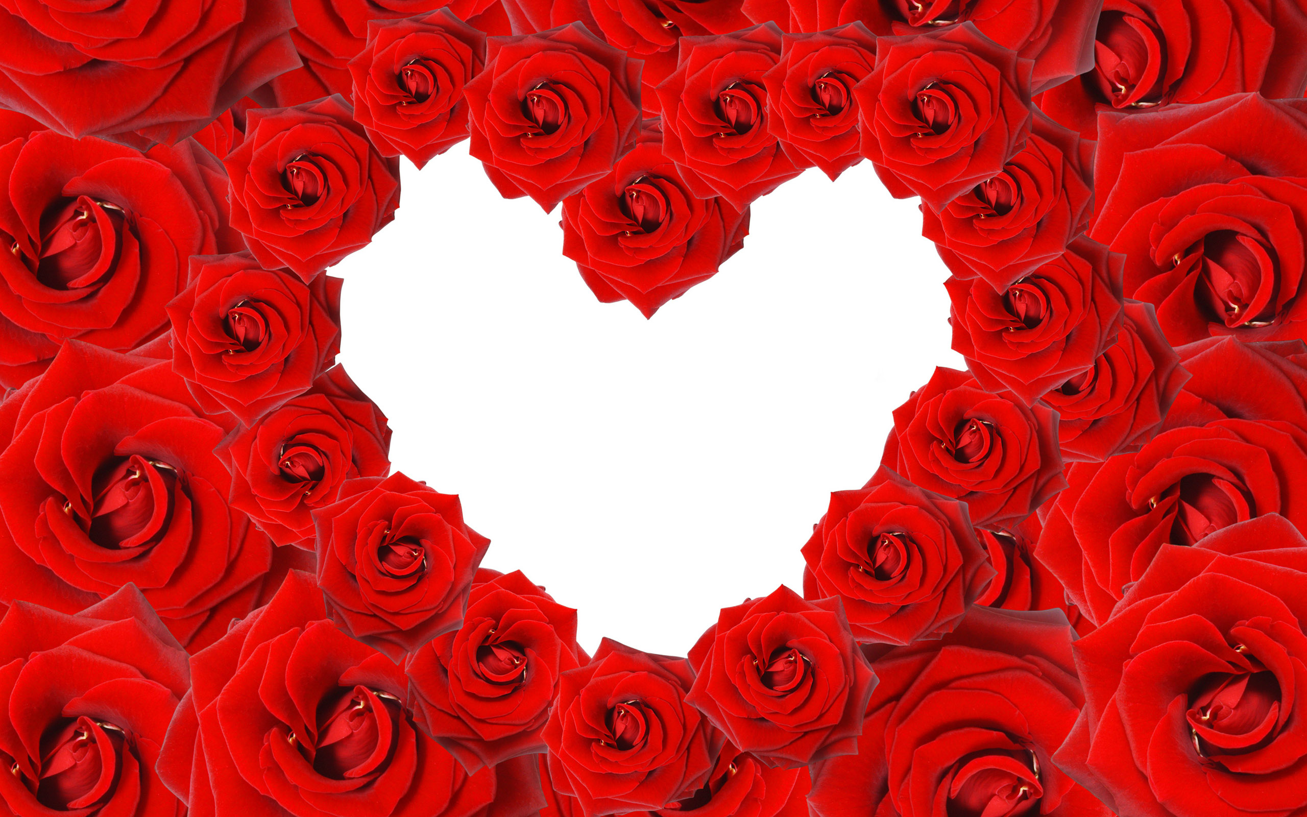 Red Roses Love Heart Wallpapers HD Wallpapers 2560x1600