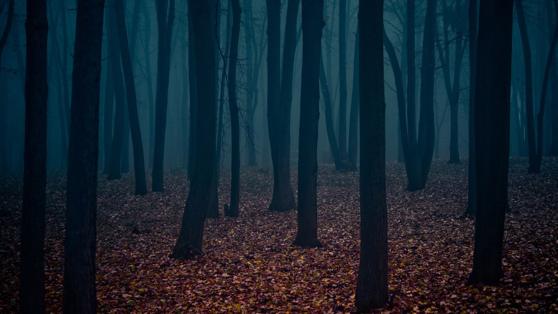 Dark Autumn Forest Wallpaper 2520 1920x1080