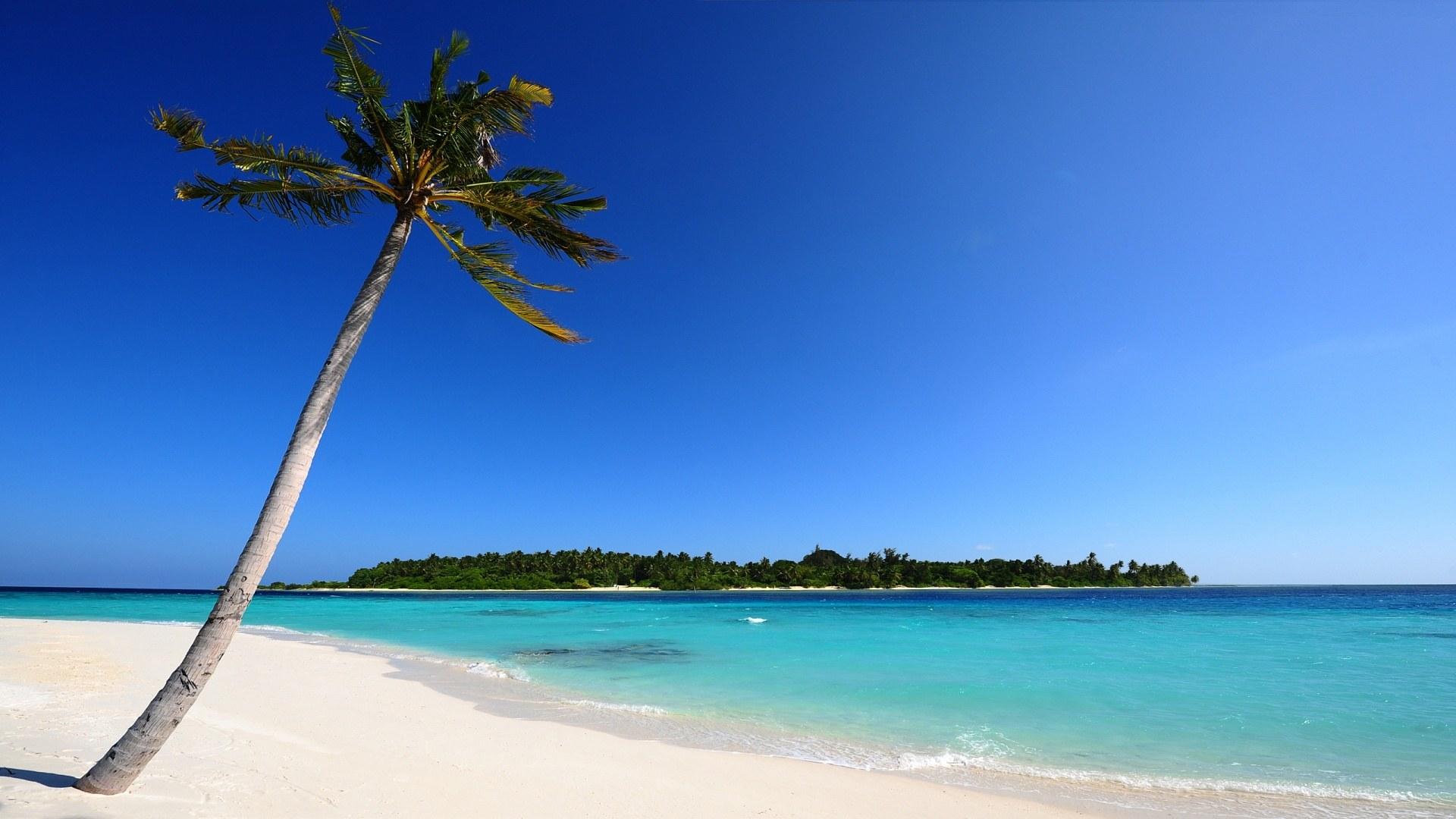 Palm Tree On Maldivian Beach 1920x1080 HD Wallpaper Sunny Beaches 1920x1080