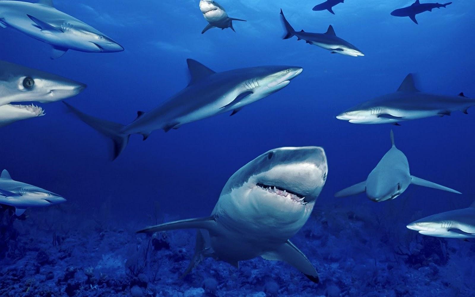 Cool Shark Wallpapers - WallpaperSafari