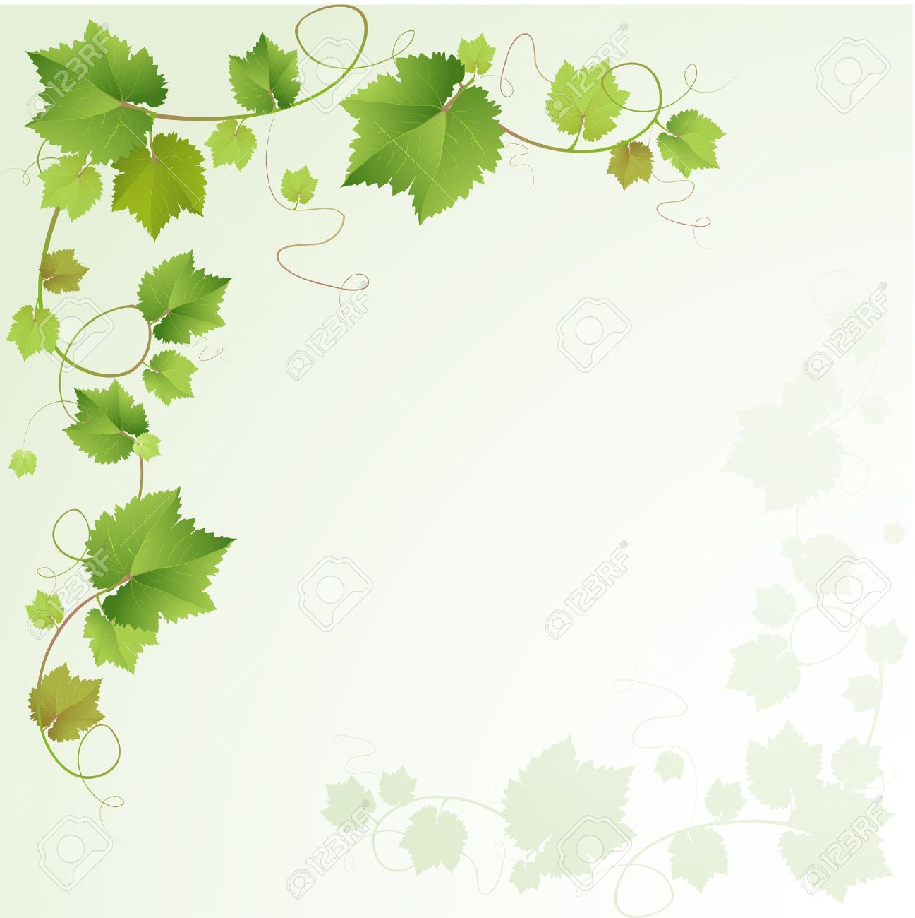 Grapes Vine Background Royalty Cliparts Vectors And Stock 1297x1300