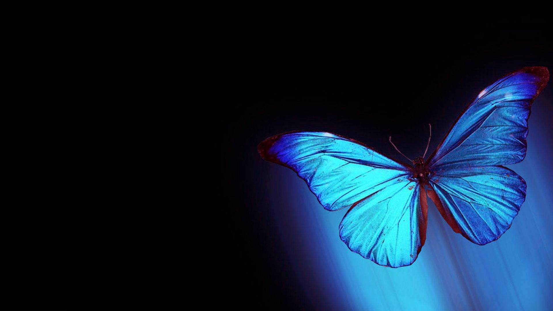 Бабочка1  № 2342582  скачать