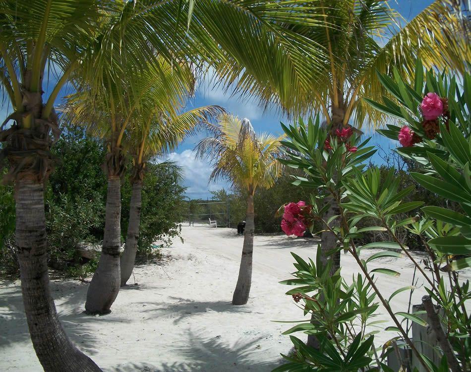 tropical beach wallpaper 120 - photo #31