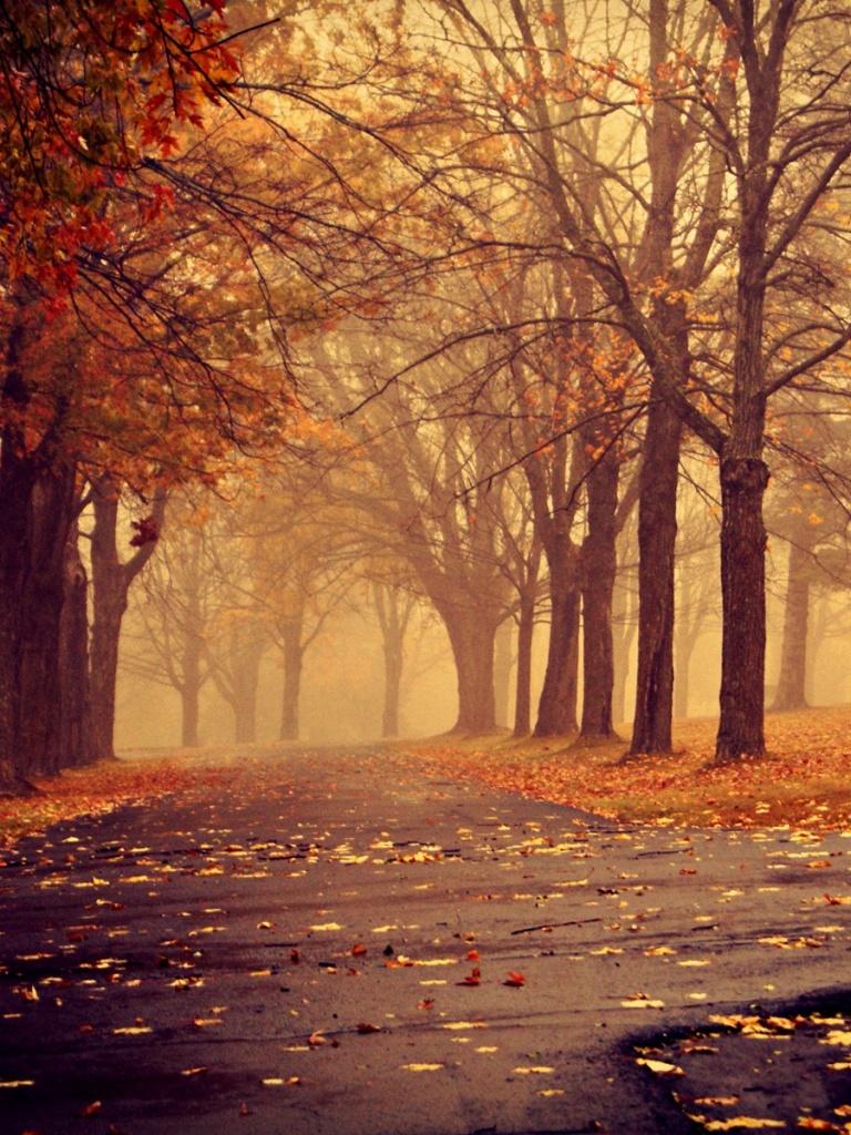 768x1024 Park in Autumn Ipad wallpaper 768x1024