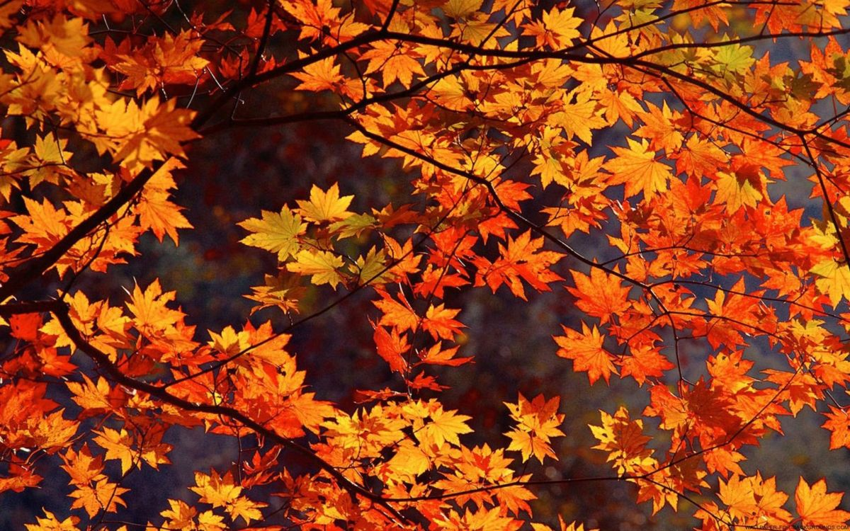 Free Download 25 Awesome Fall Wallpapers For Your Desktop
