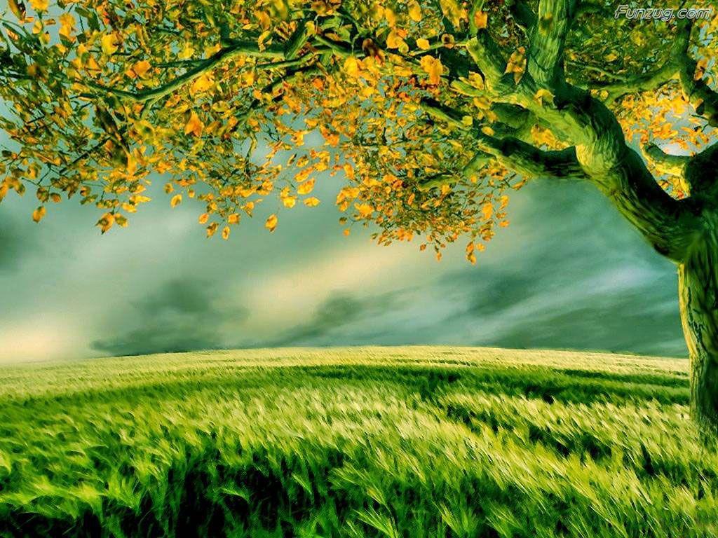 Funzugcom So Nice Nature Wallpapers 1024x768