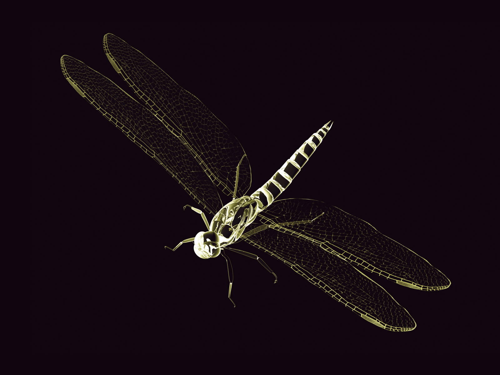 Dragonfly 3D wallpapers and images   wallpapers pictures photos 1600x1200