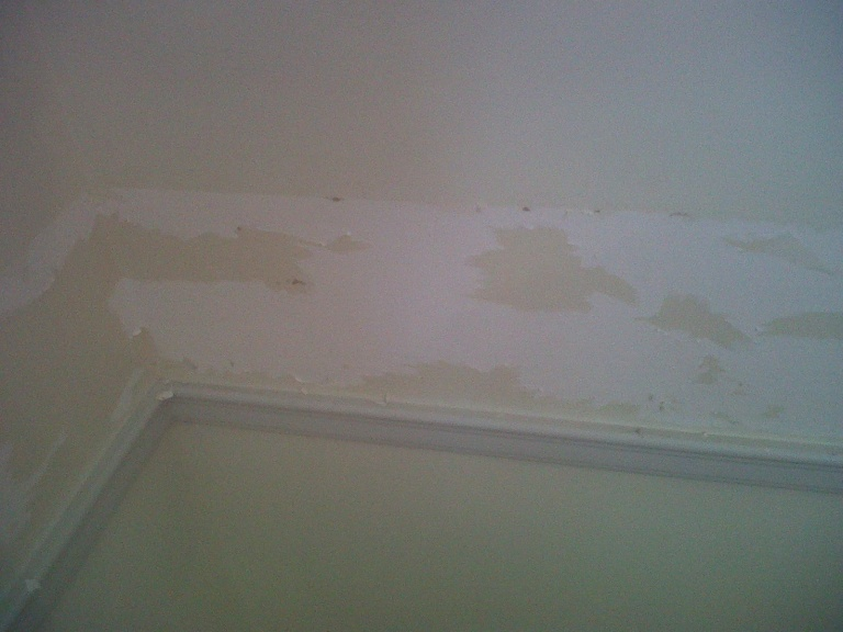 Free Download Wallpaper Removal Problems General Diy